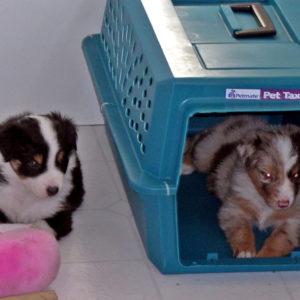 Bella and Jammie at 4 weeks of age
