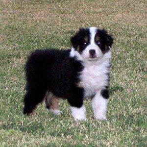 Bella at 5 weeks of age