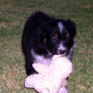Lola with her lambie at 4 weeks of age