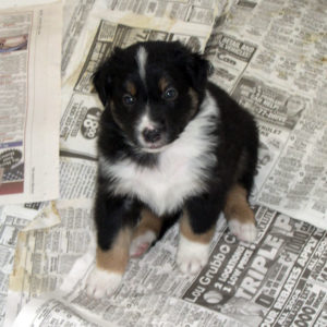 Lola at 4 weeks of age