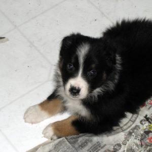 Uma at 5 weeks of age