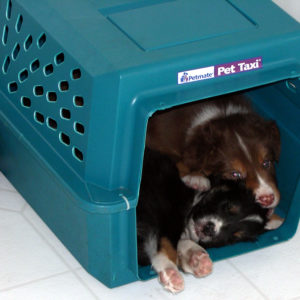 Bear and Lola hanging out in their cave at 5 weeks