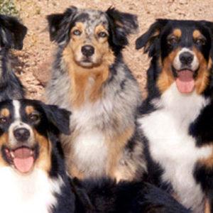 The Capricorn Crew circa 1998: Abbi, Harley, Phoebe, Zoe, Symon and Cody