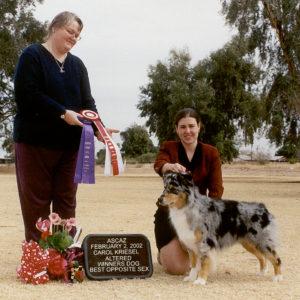Jazz winning Altered Winners Dog and Altered Best Opposite Sex under Judge Carol Kriesel at ASCAZ 02.02.2002
