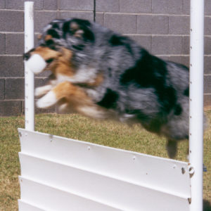 Jazz performing the High Jump exercise
