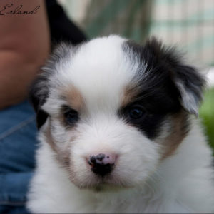 Rowdei at 3 weeks of age. Photo by Heidi Erland