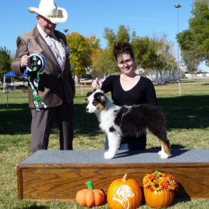 Rowdei winning Best of Breed Puppy at the Southern Nevada ASC show, 2010. This was the day I picked him up!