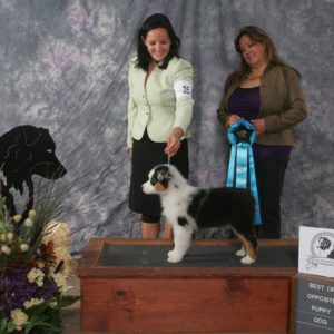 Rowdei winning Best Opposite Sex Puppy at the All Around ASC Nationals Preshow in Texas, 2010