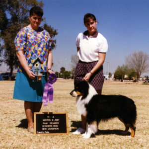 Symon finishing his ASCA Championship going Winners Dog at ASCAZ, under Judge Pam Sehmer, March 8, 1997. Photo Credit Kristin Rush