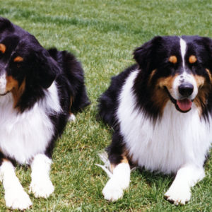 Symon and his sire, Quinn.