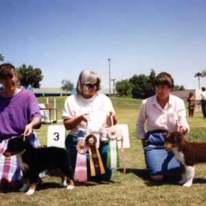 Phoebe winning Best of Breed Puppy, and Jasper winning Best Opposite Sex Puppy under ASCA Senior Breeder Judge Sharon Herbert, at ASCAZ, Phoenix AZ, April 5, 1992