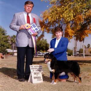 Phoebe winning Best of Breed at the ASCAZ Silver Specialty under Judge Vern Harvey, November 1993. This was a fantastic win over a lot of really nice Specials, considering Phoebe was not yet quite two years old!