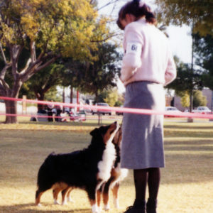 Phoebe and her aunt Scooter (BISS CH. Chrisdava's T-N-T of Shadowrun, CD, STDdsc, DNA-CP) in Brace at the ASCAZ Silver Specialty, November 1993. Handled by Kristin Rush
