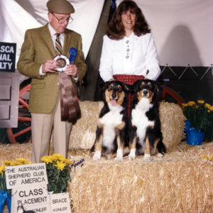 Phoebe and her aunt Scooter (BISS CH. Chrisdava's T-N-T of Shadowrun, CD, STDdsc, DNA-CP) taking 2nd Place in Brace under Judge Bruce Voran at the ASCA National Specialty, November 1994. Handled by Kristin Rush