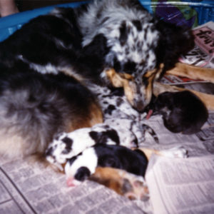Harley with her newborn litter, May 22, 1989