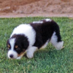 Bisbee 5-6 weeks