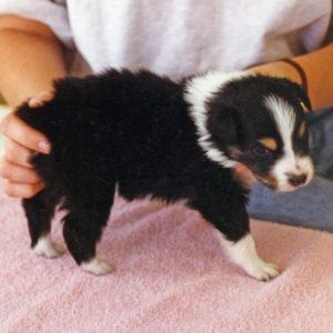 Cody 4 weeks