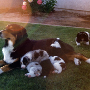 Phoebe with her litter at about 4 weeks of age