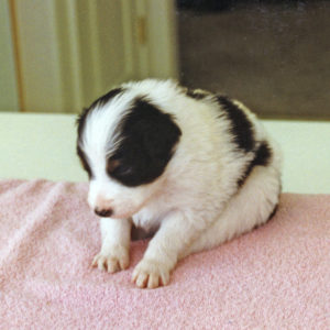 Holt at about 4 weeks