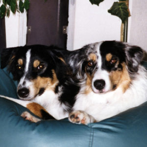Cody and Zoe hanging out in the beanbag chair, about 6 months old