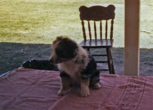 Abbi at 5 weeks of age, Kearney AZ