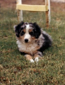 Abbi at 8 weeks of age