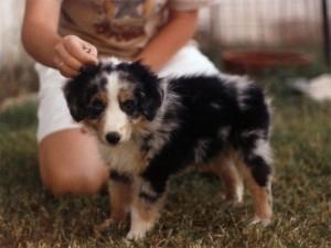 Abbi at 8 weeks of age2