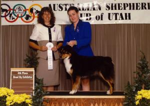 Clover winning 4th Place in Bred by Exhibitor Bitch at the ASC of Utah nationals preshow under ASCA Senior Breeder Judge Kristin Rush, September 2001