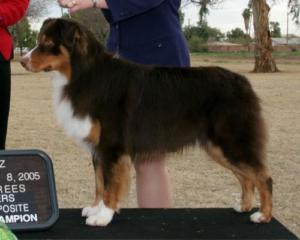 ASCA/AKC/INT'L CH. Capricorn's Frequent Flyer, DNA-VP